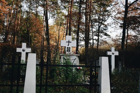 cmentarz wojenny w puszczy niepołomickiej